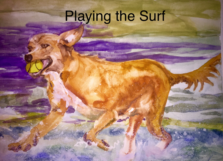 Labrador running in shallow surf playing with caught tennis ball