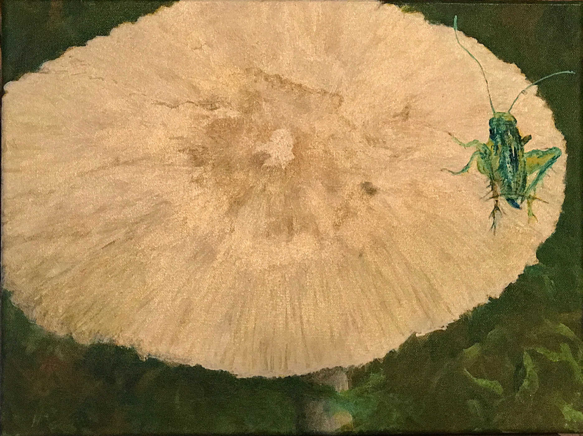 Insect, grasshopper, on a mushroom or fungi