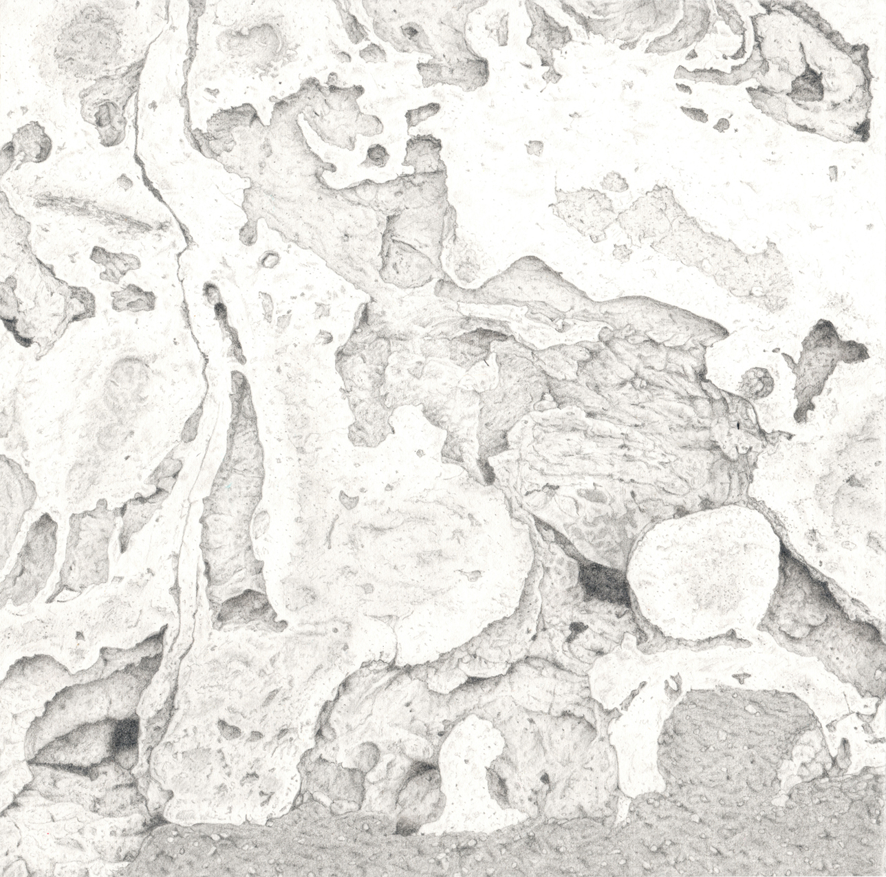 Observation, realism, graphite on paper, texture, nature, abstraction, drawing