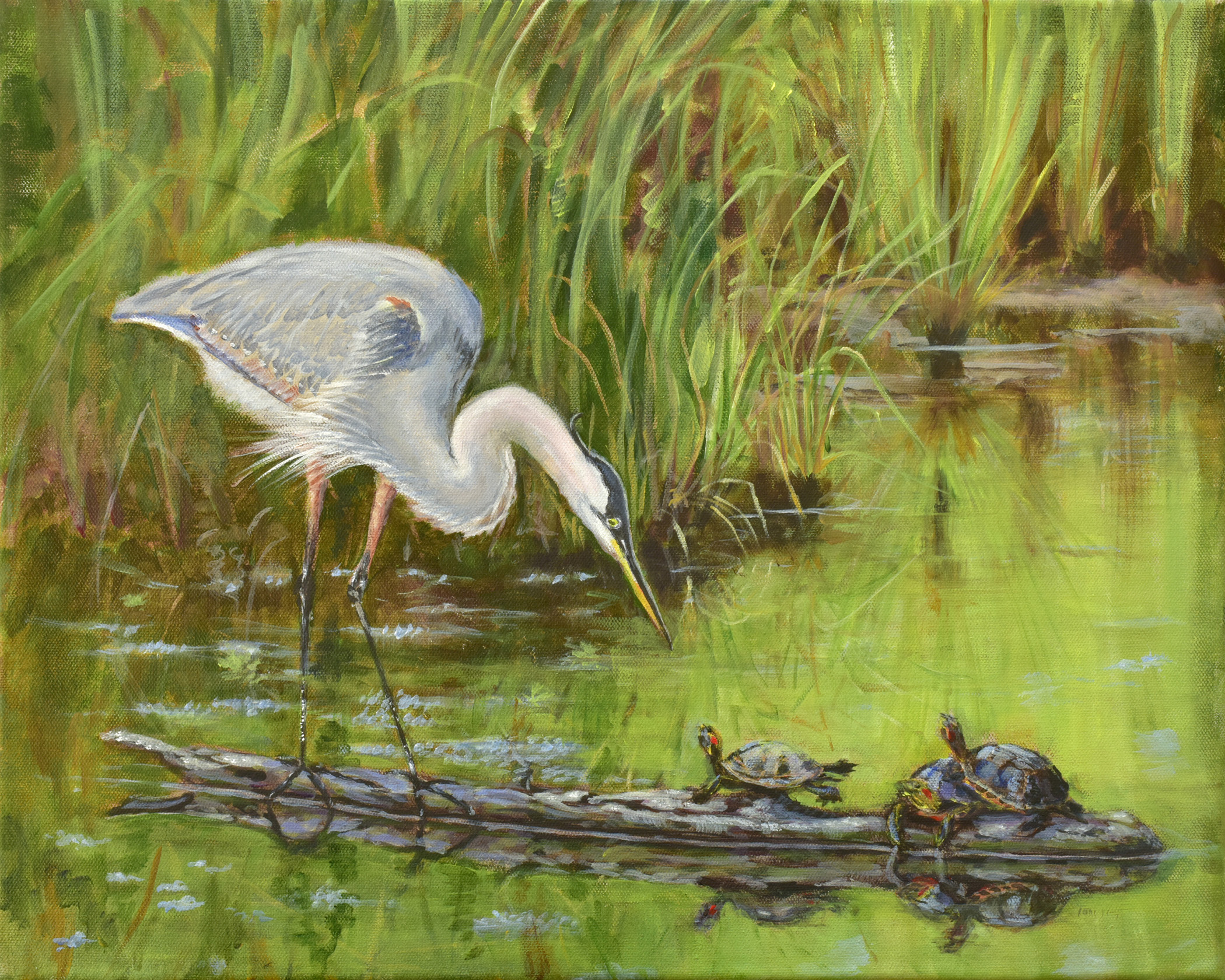 Great blue heron, turtles, pond, grasses, wildlife, Chesapeake bay