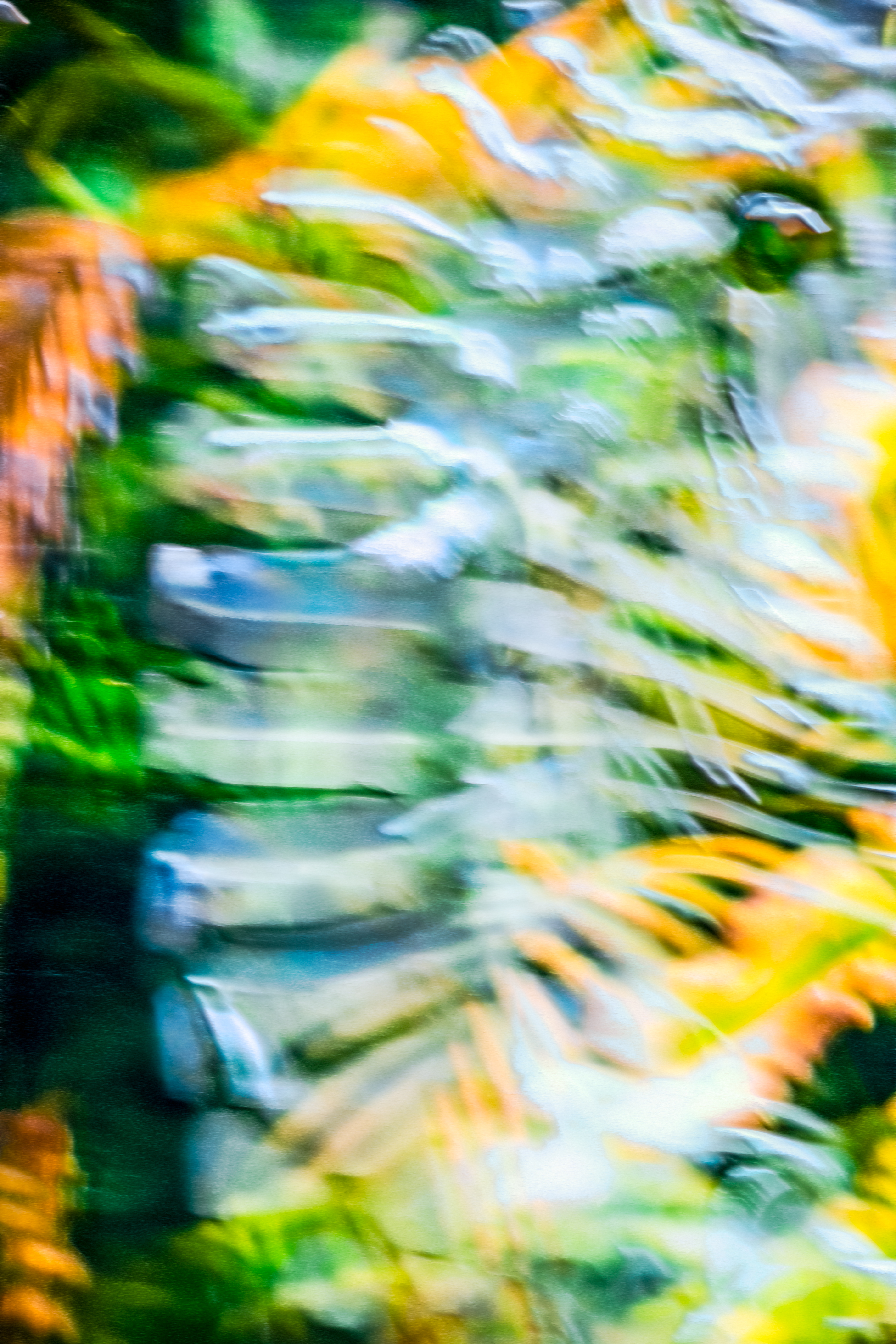 This photograph, Fragments and Divisions, melds the energies of botanical and zoological life forms.