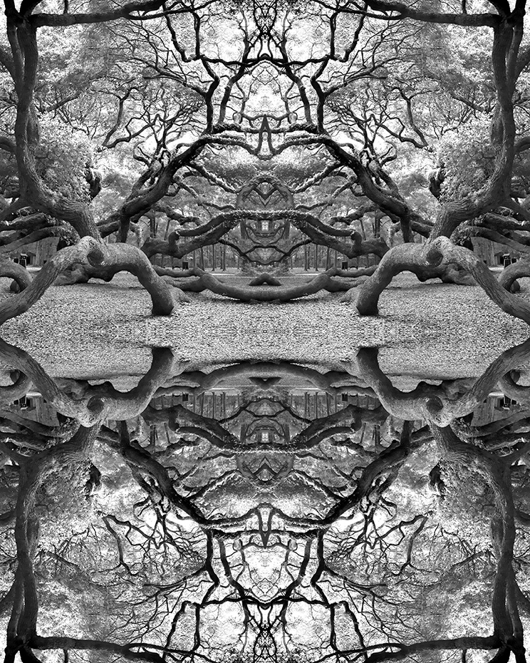 Abstract black & white photograph investigating interactions of the visual beauty & complexity of southern oak trees.