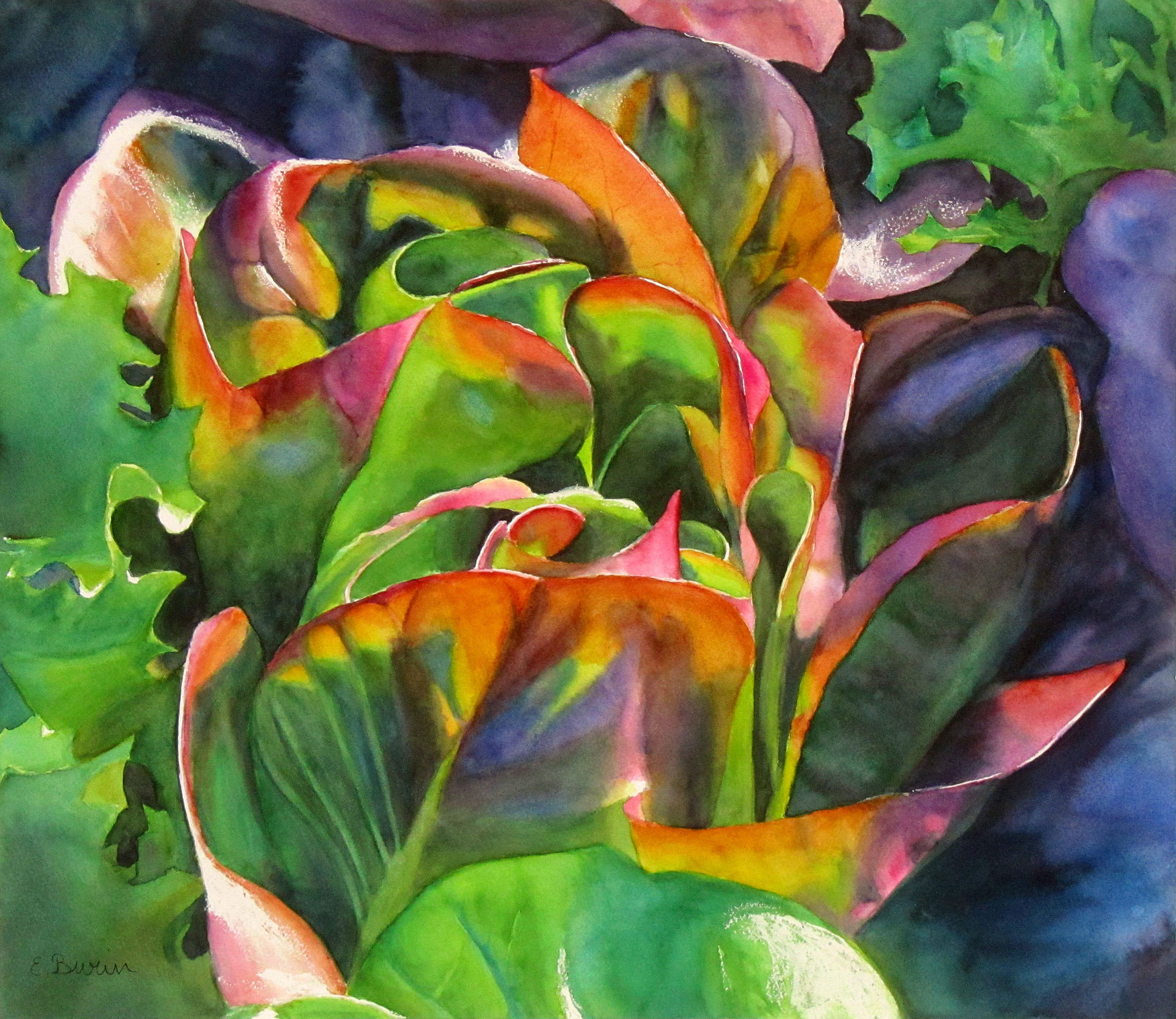 Red Lettuce, watercolor painting by Elizabeth Burin, nature, botanical, food