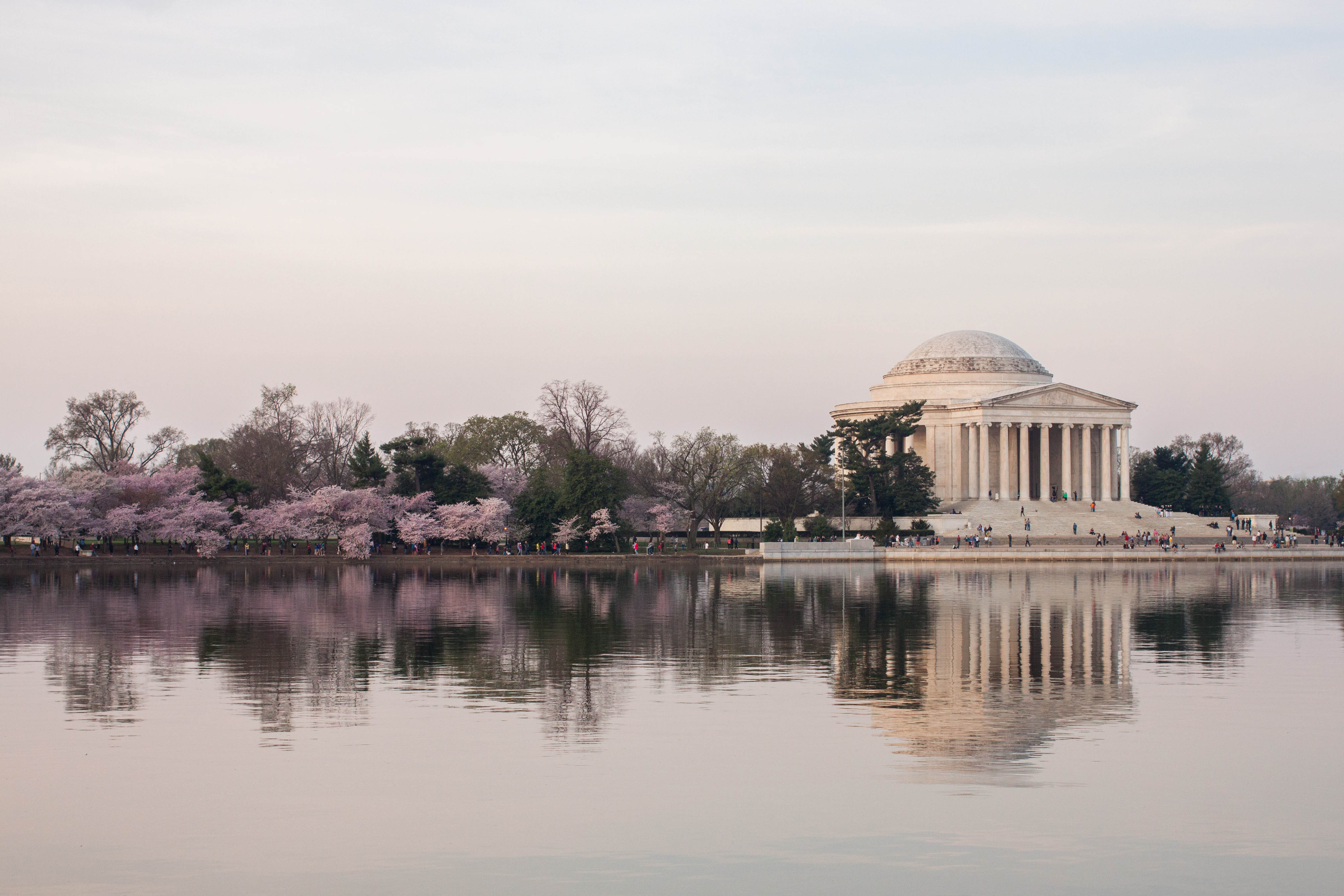 Blooming cherry blossoms surround the Jefferson Memorial in Washington, DC during the Cherry Blossom Festival.