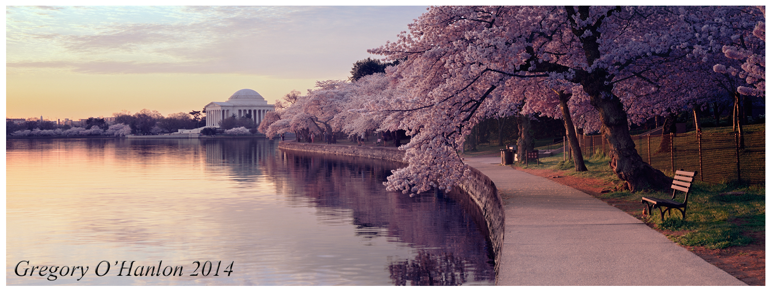 Cherry Blossoms- Jefferson Memorial- Sunrise