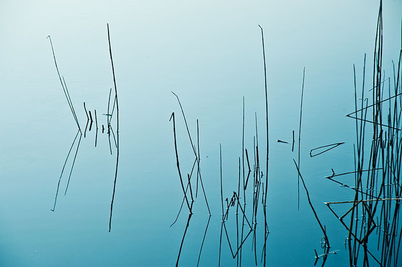 Image of reeds and reflections