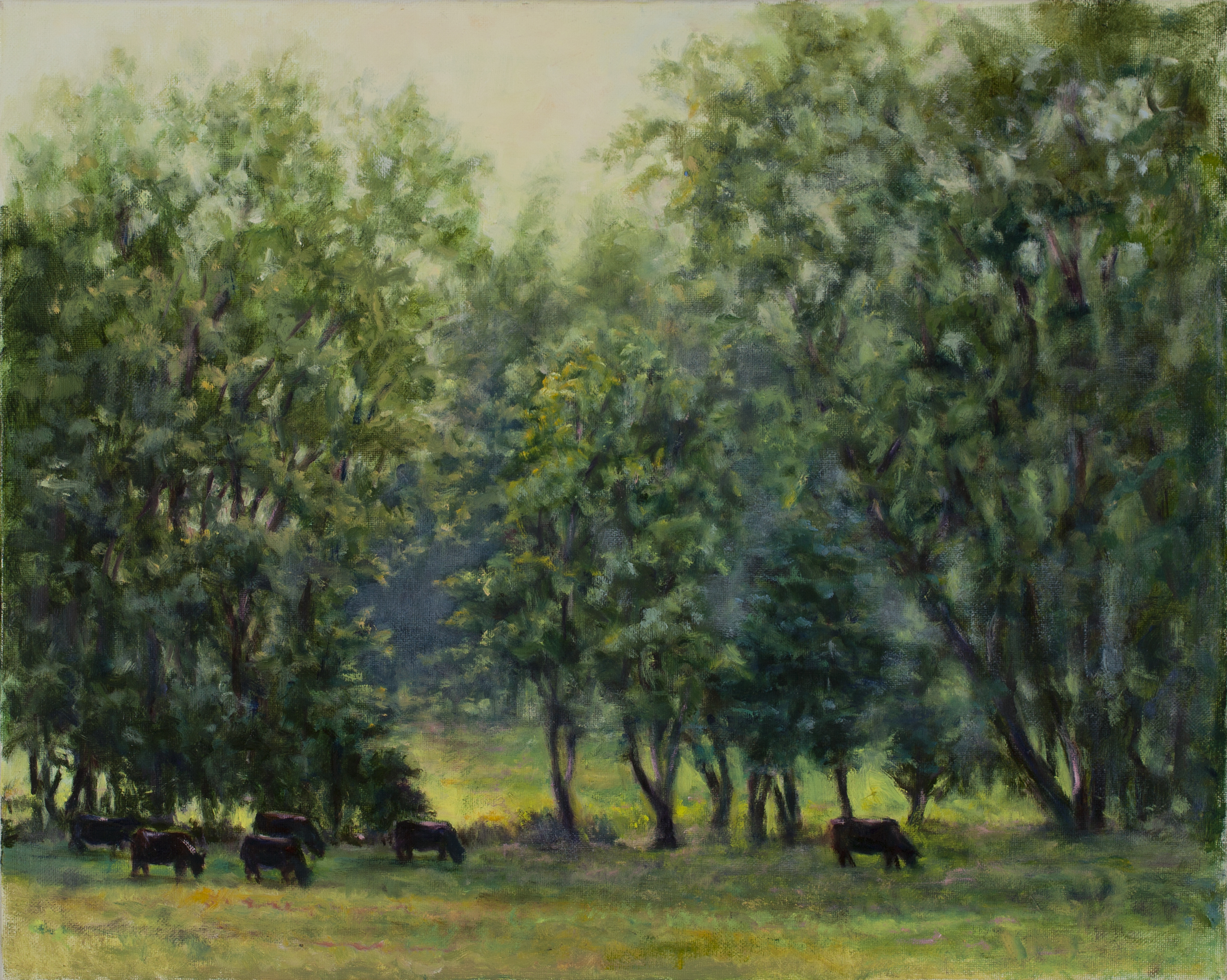 Cows ,landscape, sunlight, sunlit Forest ,trees,pastoral grazing cows