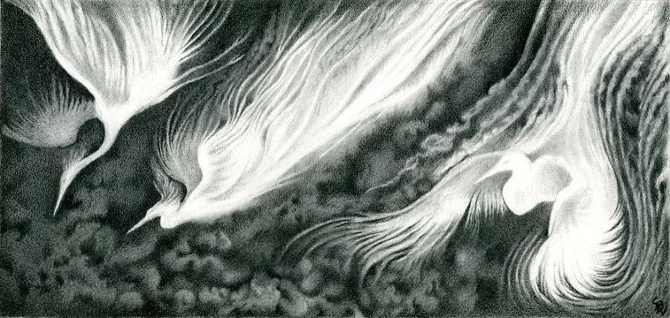 Pencil drawing of 3 ghostly white cranes descending from the sky