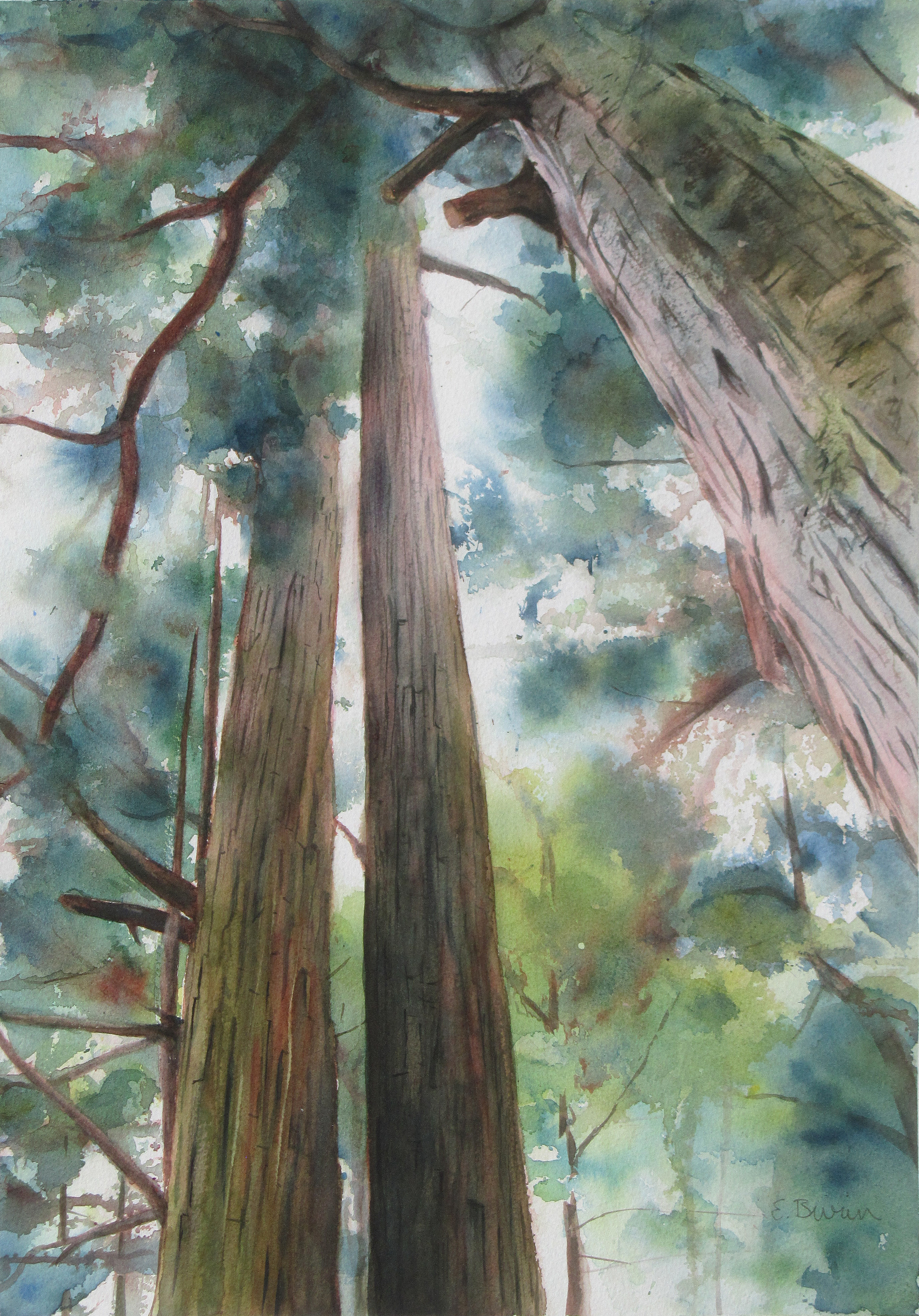 Watercolor painting of Japanese cypress trees seen from below.