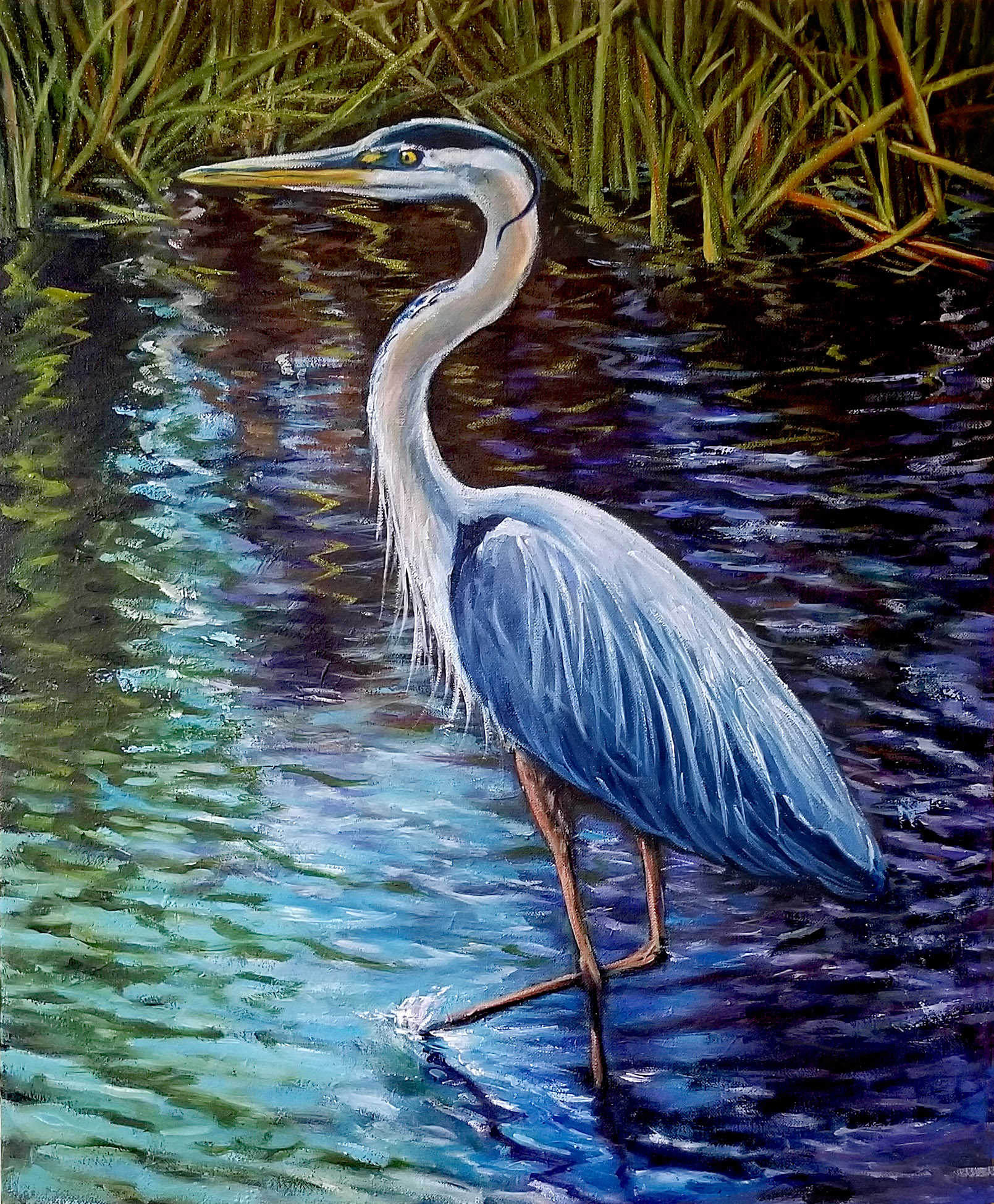 Heron wading in water Everglades