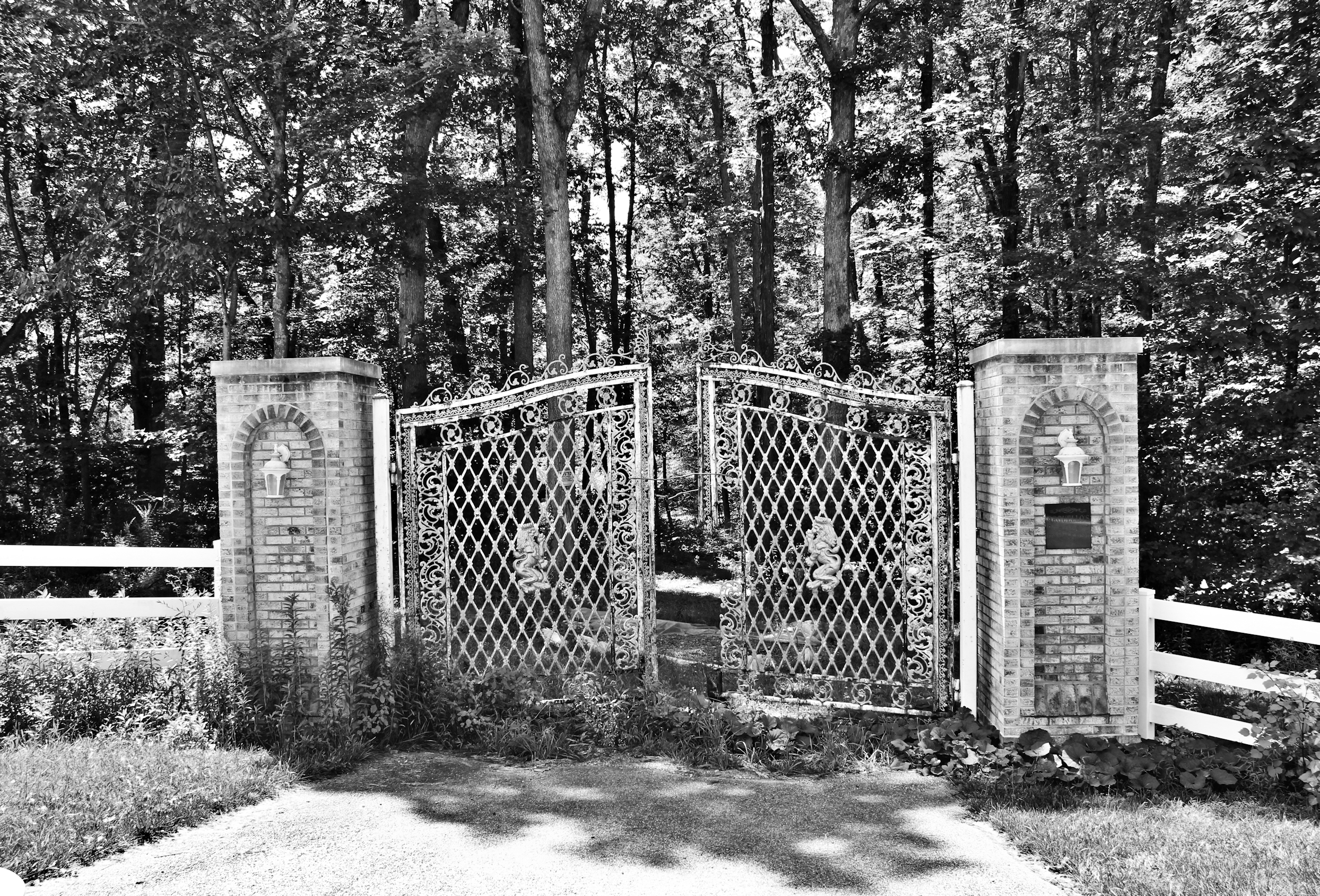 Vintage iron gate leading to a forest