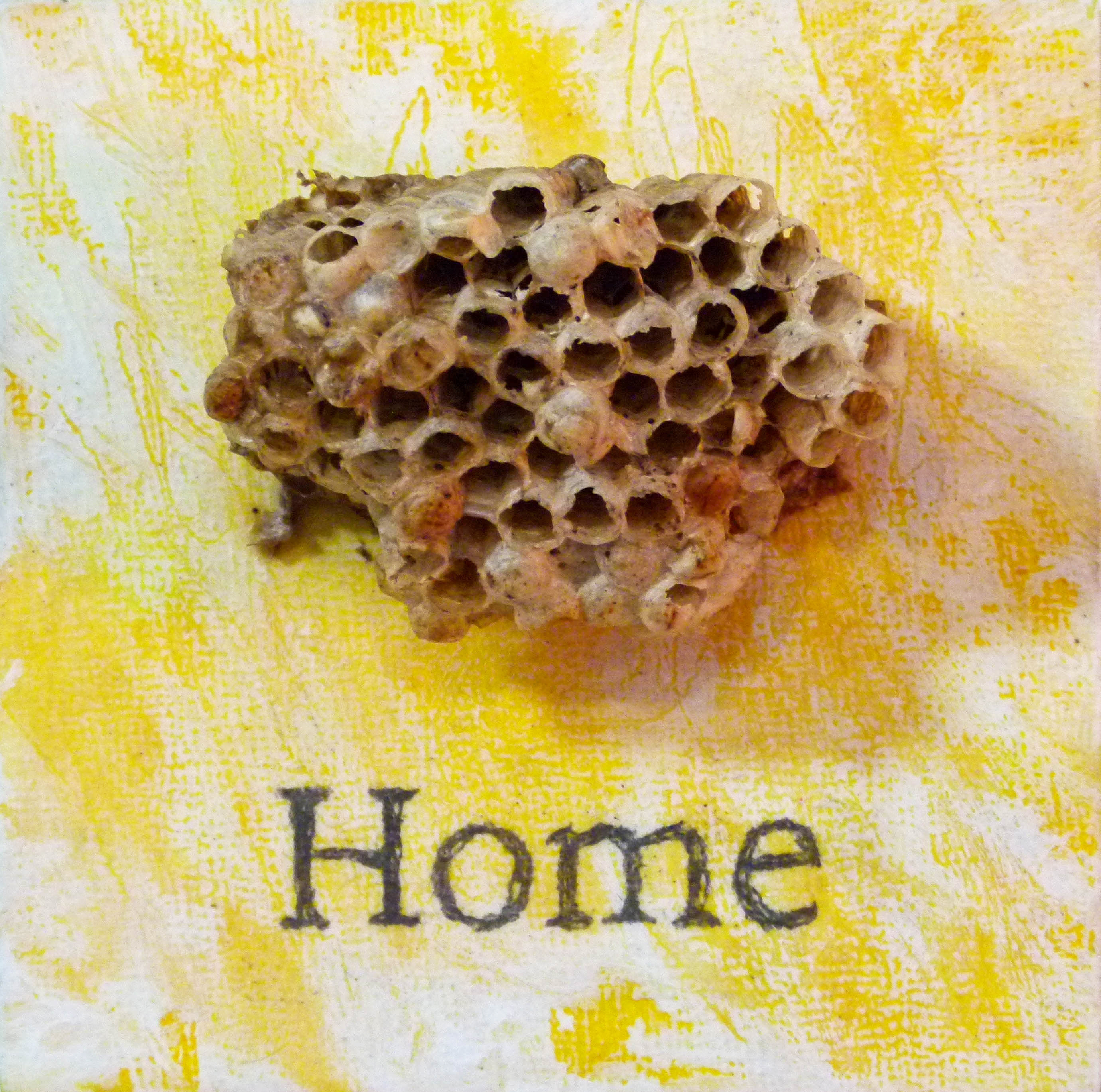 Wasp nest and text on panel