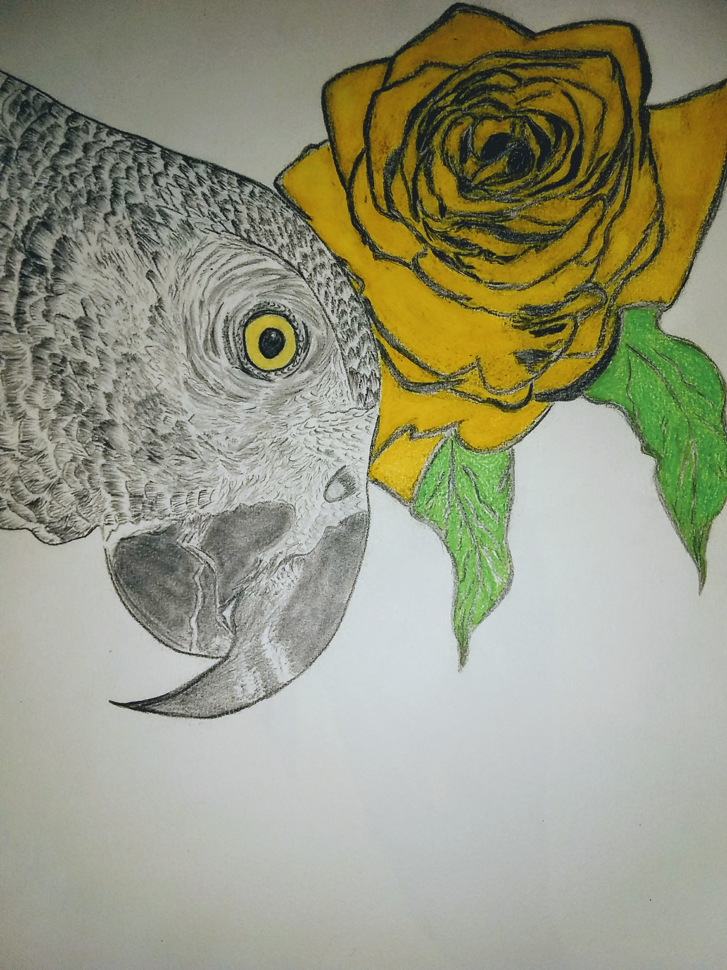 Birds, parrot, wildlife, drawing, portrait, rose, yellow, pencil, art, modern