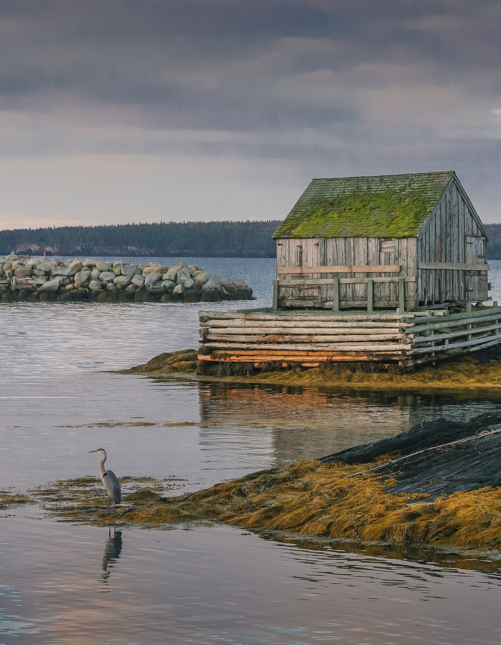 heron, great blue, great blue heron, waterbird, fishing shack, dawn