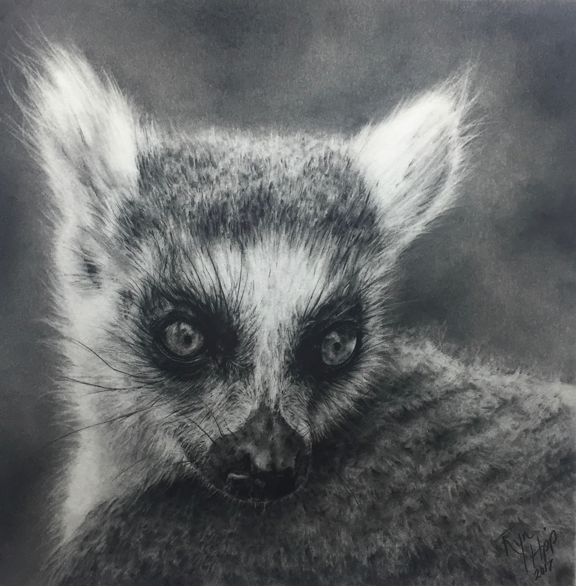 Graphite drawing of a ring-tailed lemur