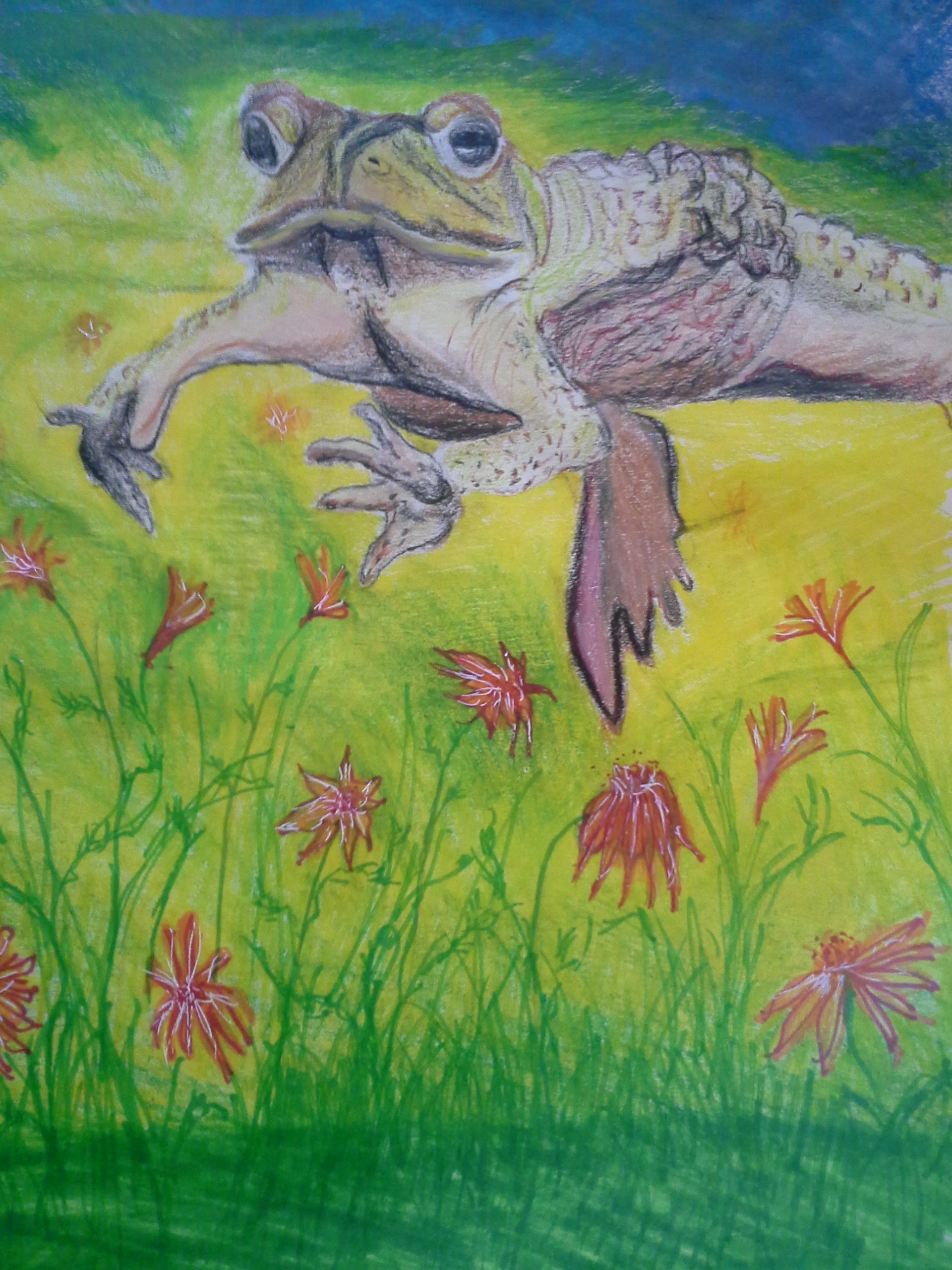 image of a frog in a meadow