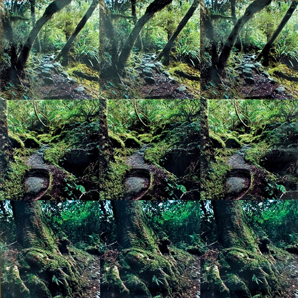 forest, rainforest, green, primal, nature