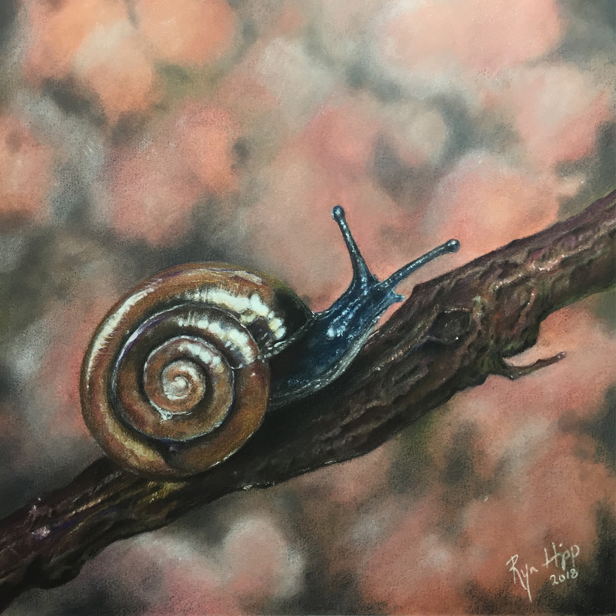 Colored pencil drawing of a snail on a branch.