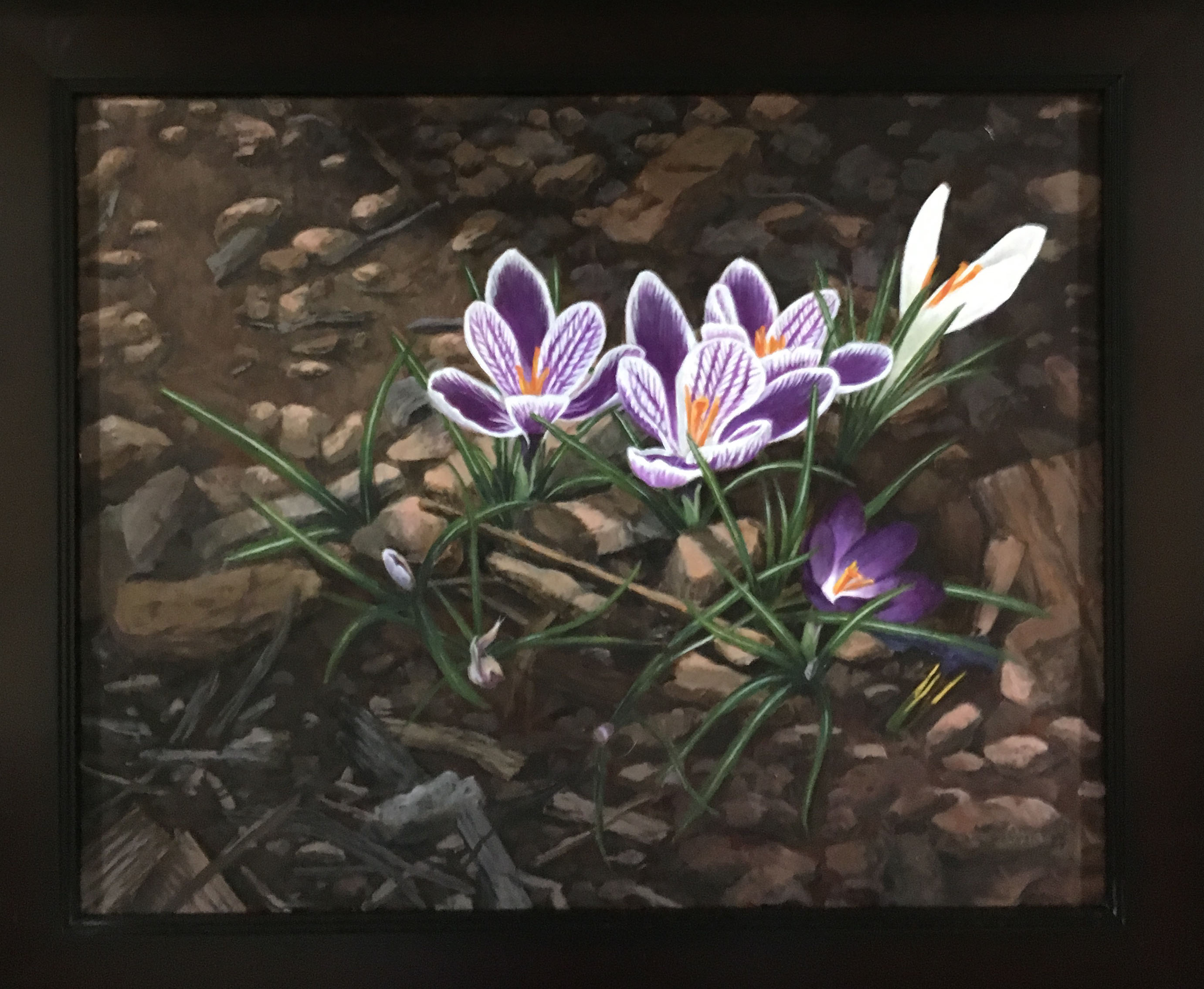 spring crocus outdoors