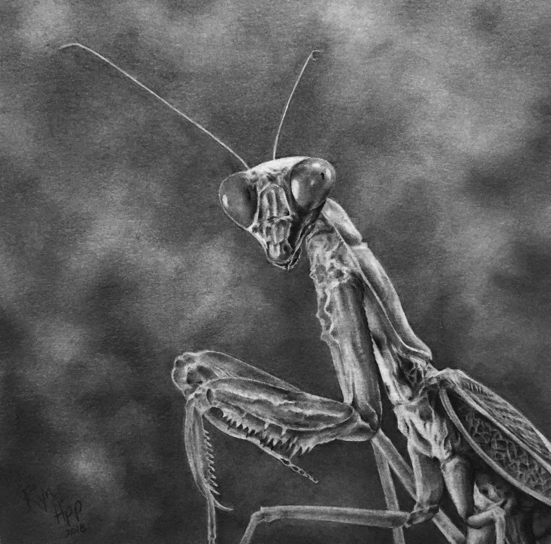 Graphite drawing of a praying mantis.