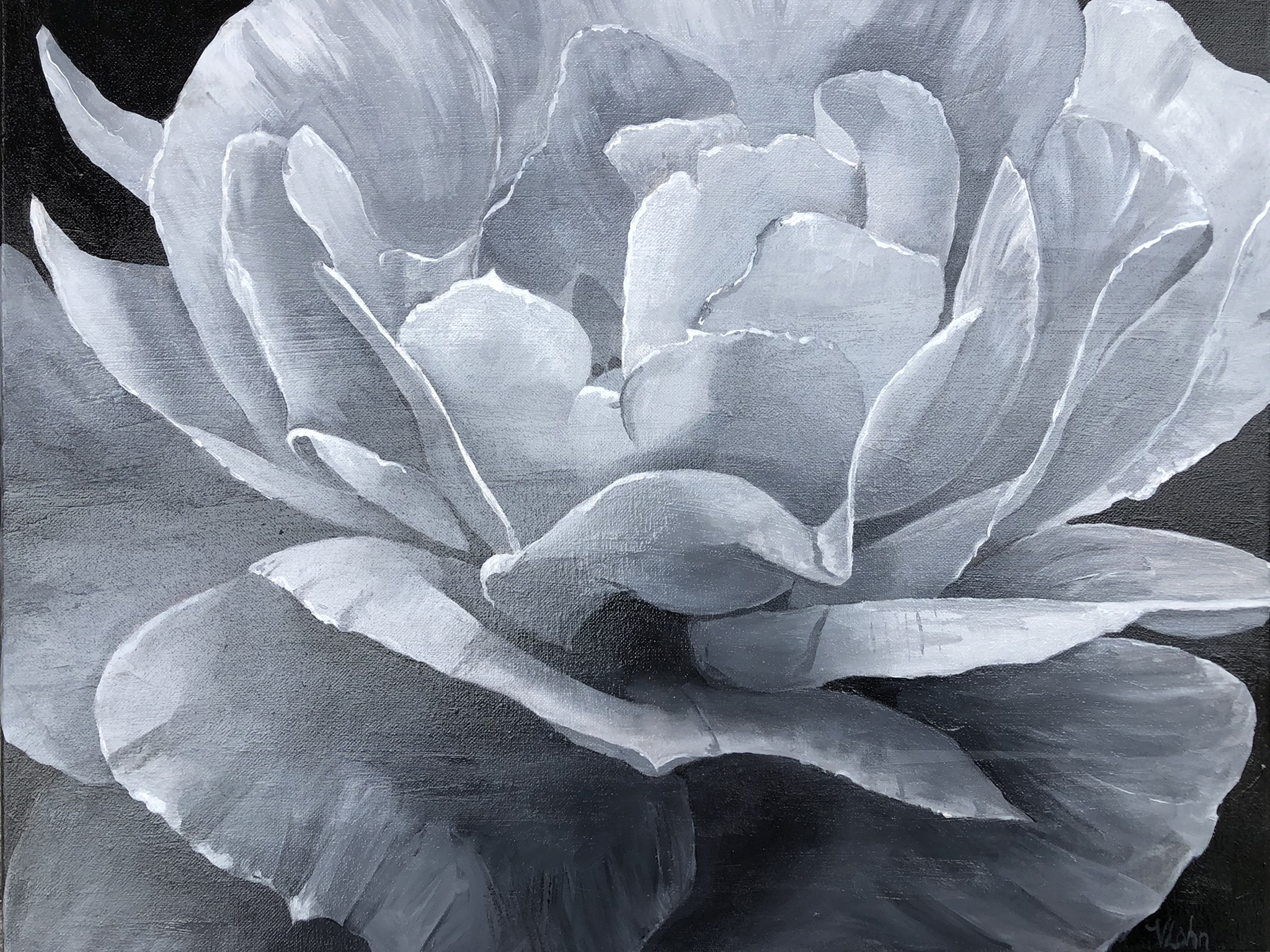 Floral, grisaille, rose