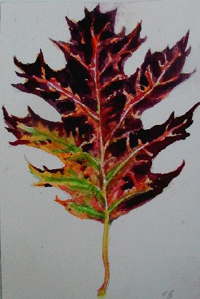 Fall Leaf Watercolor Painting Artwork Fine Art