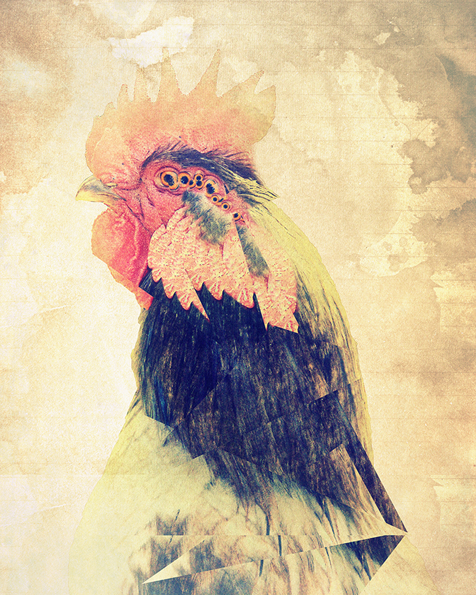 animalia rooster